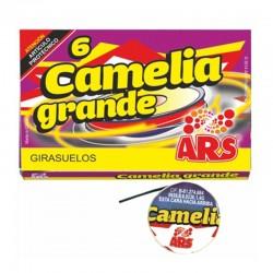 GIRASUELO CAMELIA GRANDE